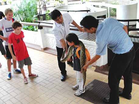 Small boy learning about Burmese Python in Bangkok Snake Show - Queen Saovabha Memorial Institute.