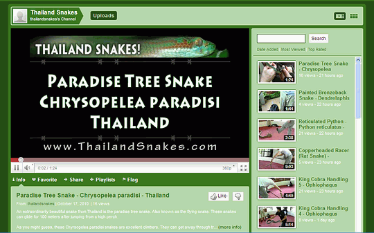 Screenshot of ThailandSnakes Youtube Channel focusing on snakes of Thailand.