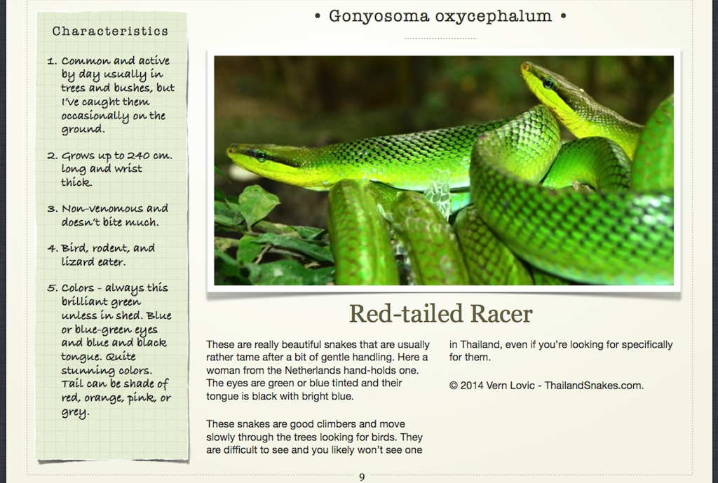 Red-tailed Racer page in book.
