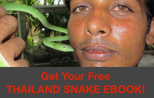 Informational eBook for visitors and locals in Thailand - Common Venomous and Non-venomous Snakes of Thailand.