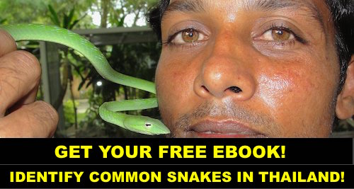 Free Thailand Snake Identification eBook