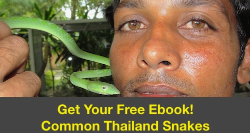 Free informational ebook to help you identify Thailand's venomous and non-venomous snakes.