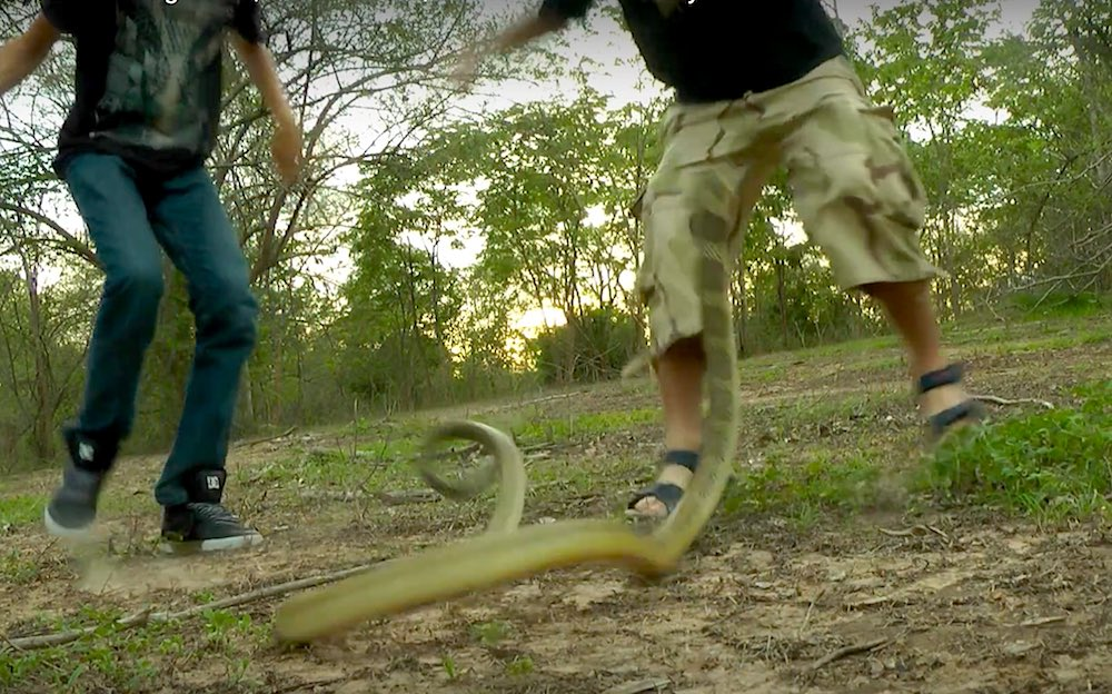 King cobra striking at man's balls. Amazing footage, never before seen.