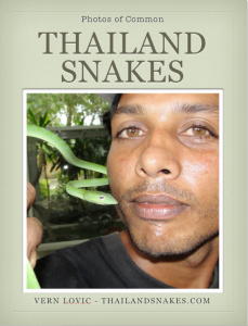Common Thailand Venomous and Non-venomous Snakes ebook free for download.