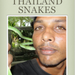 Photos of Common Thailand Snakes - Free ebook download.