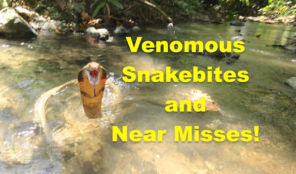 Ebook - Venomous Snakebites and Near Misses by Vern Lovic.