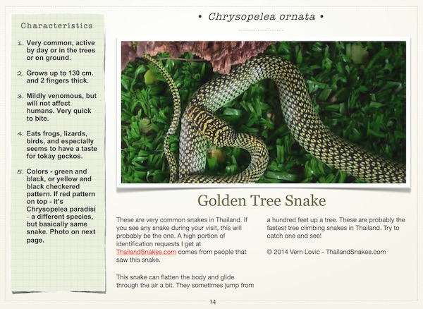 Golden tree snake for common Thailand snakes ebook.