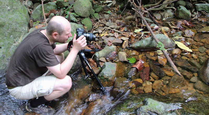 Domokos Toth shooting in-situ photos of a green pit viper in Southeast Asia.