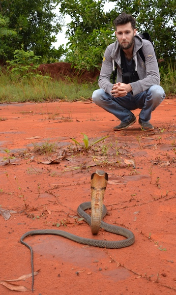Alex Gillard with a juvenile King Cobra from Thailand Snakes herping adventures.